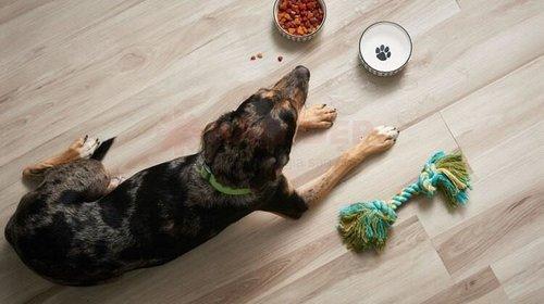 Gia đình có thú cưng nên lắp đặt sàn gỗ nào?
