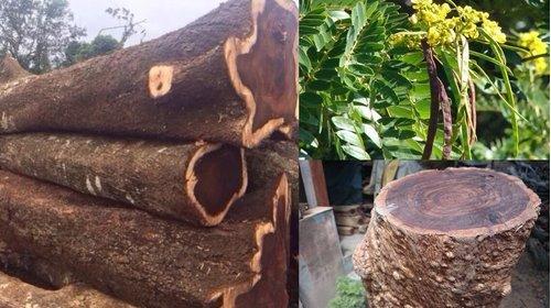 Tìm hiểu về gỗ Chiu Liu – Sàn gỗ Chiu Liu có tốt không?